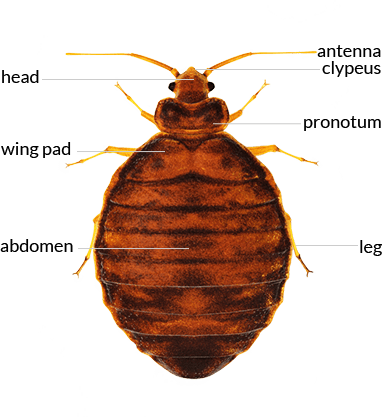 bed bug found in an augusta me home