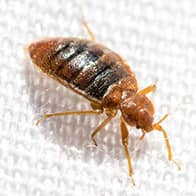 bed bug found in a hotel in augusta me
